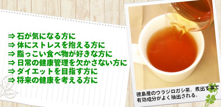 ウラジロガシ茶はおすすめです